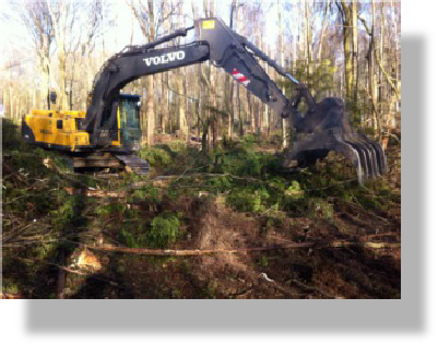 Clearing a forester after timber has been harvested
