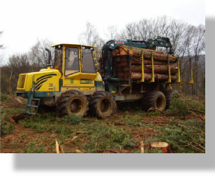 Treewood Harvesting Timber Forwarder