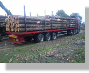 Timber being loaded onto haulage